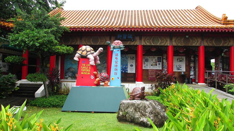 Singapore's only turtle and tortoise museum to relocate to Yishun in 2019