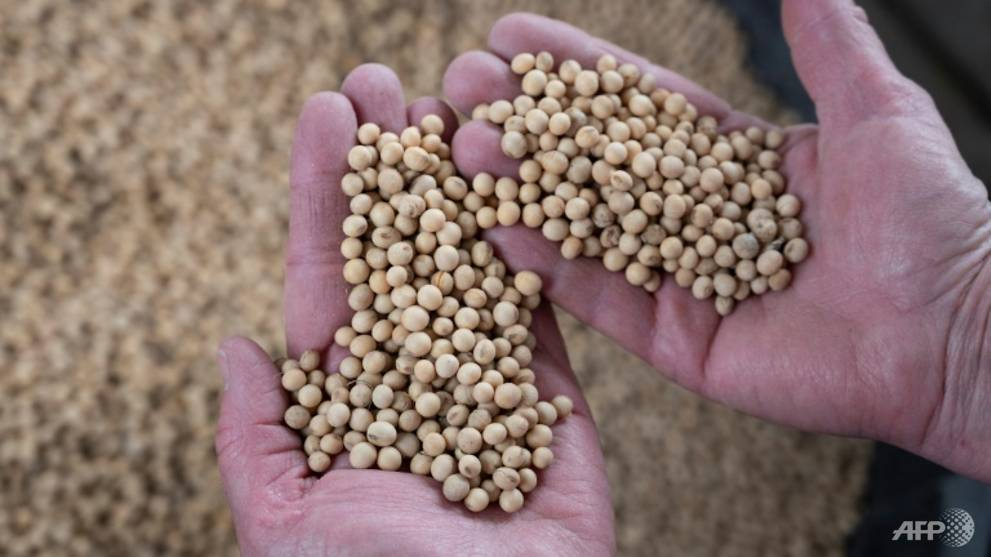 China firms stop purchases of US farm produce - CNA