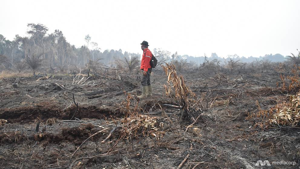 At ground zero, Indonesians cry foul over inadequate response to fight forest fires
