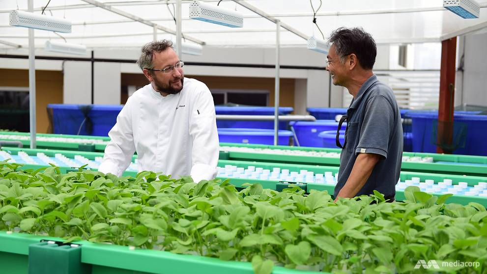 Aquaponics farming: How two hotels are looking to boost their sustainable practices