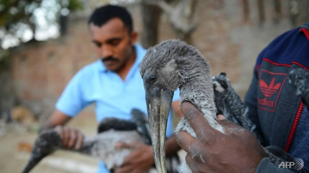 Deadly kite strings kill 150 birds in India
