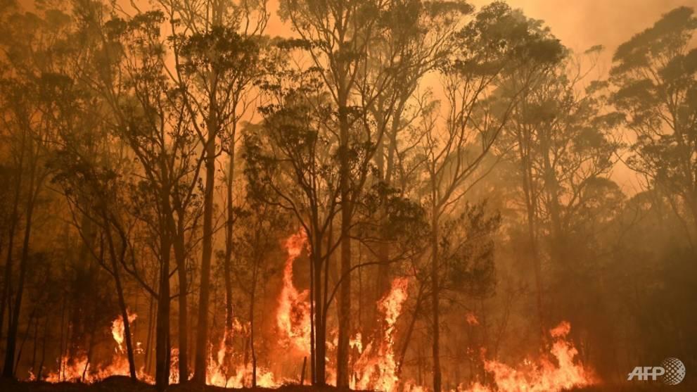 Bushfire crisis hit 75% of Australians: Survey