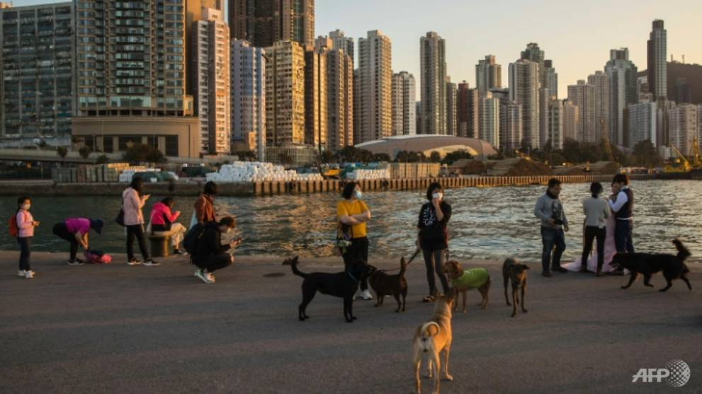Pet dog infected with COVID-19, Hong Kong authorities confirm