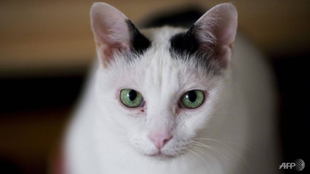 Pet cat tests positive for COVID-19 in Hong Kong