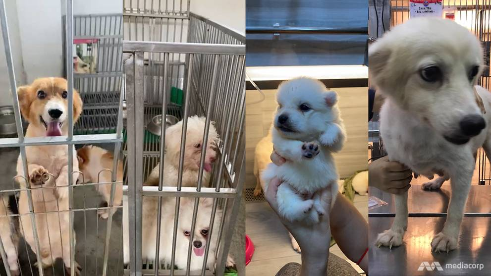 Viral message about dogs at breeding facility were not abandoned, owner is 'winding down' business: AVS