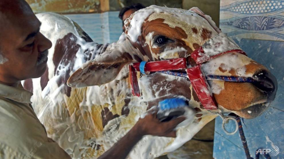 At the cow wash: Pakistanis scrub Eid animals at car cleaners
