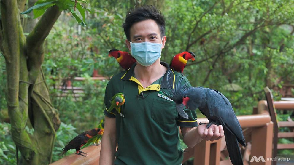 He's a 'foster parent' raising baby birds by hand, helping to save threatened species