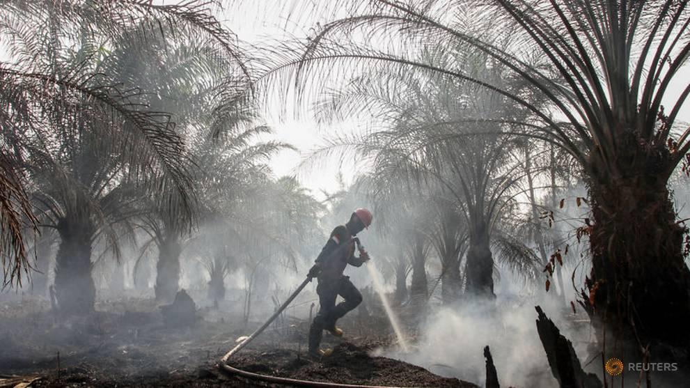 Illegal logger turns firefighter to defend Indonesia's peatlands - RapidAPI