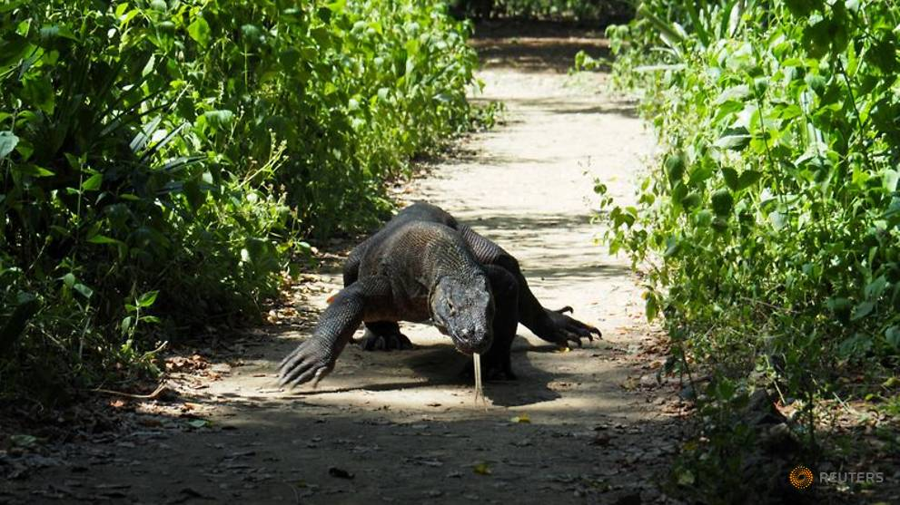 Indonesia says 'Jurassic Park' project no threat to Komodo ...