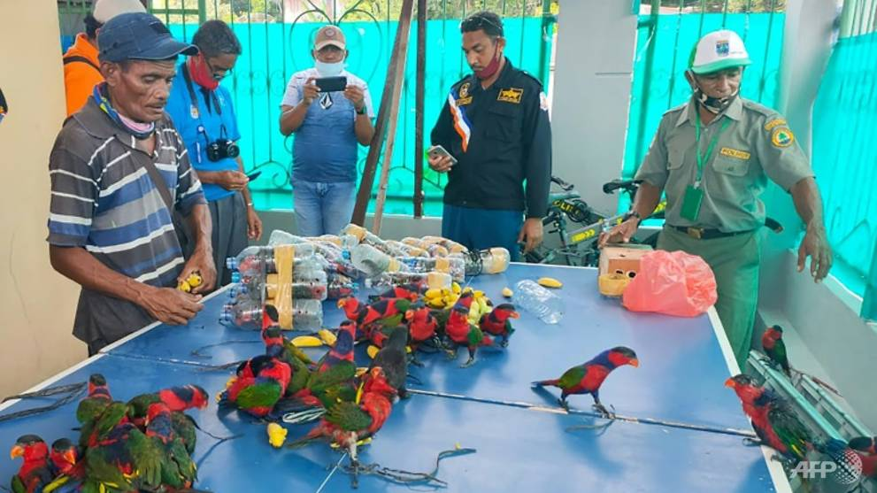 Smuggled parrots stuffed in plastic bottles: Indonesia police