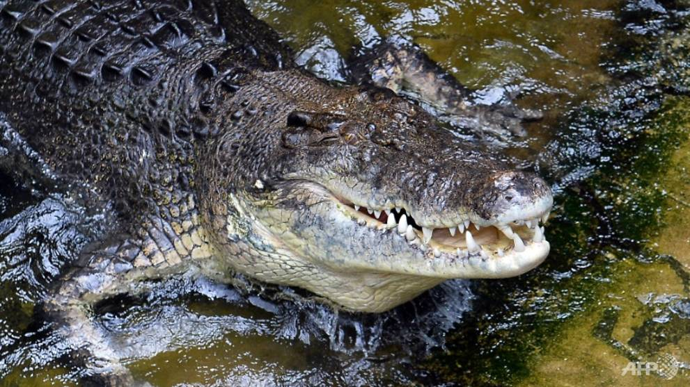 Naked fugitive found in croc-infested northern Australia waters