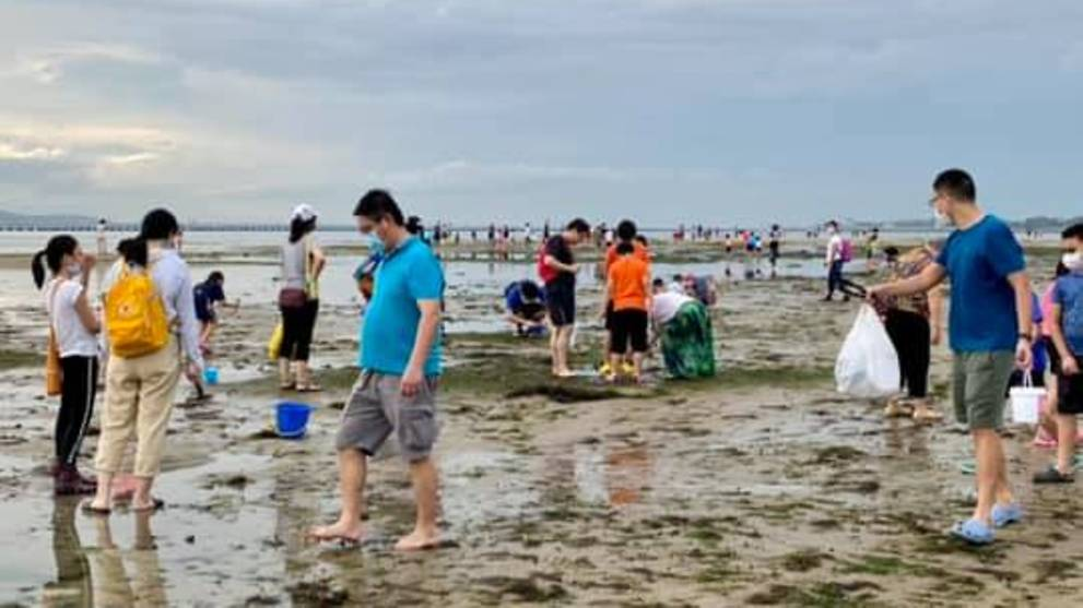 NParks 'committed' to intensify efforts to educate public on sensitive marine life