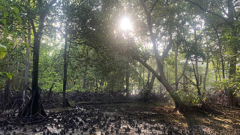 singapore-mangroves