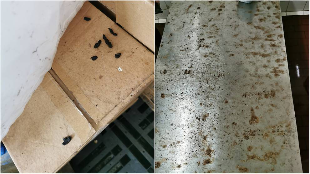 Food processing company fined S$15,000 after rat droppings found in storage, processing areas