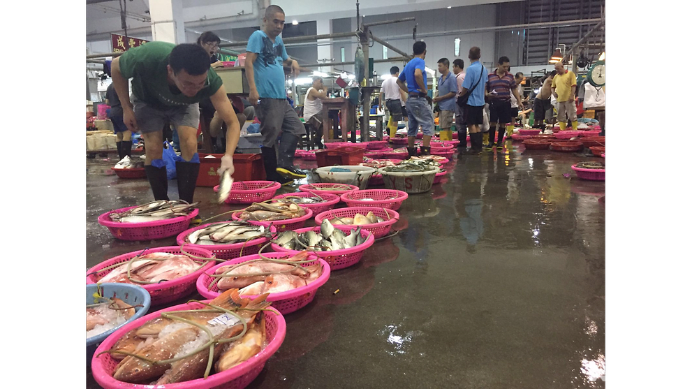 Consumers are key to seafood sustainability: WWF Singapore