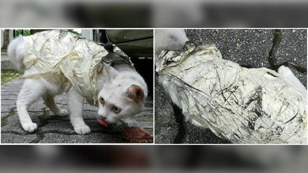 Man fined for wrapping cat in masking tape at Ubi Ave 1 - CNA