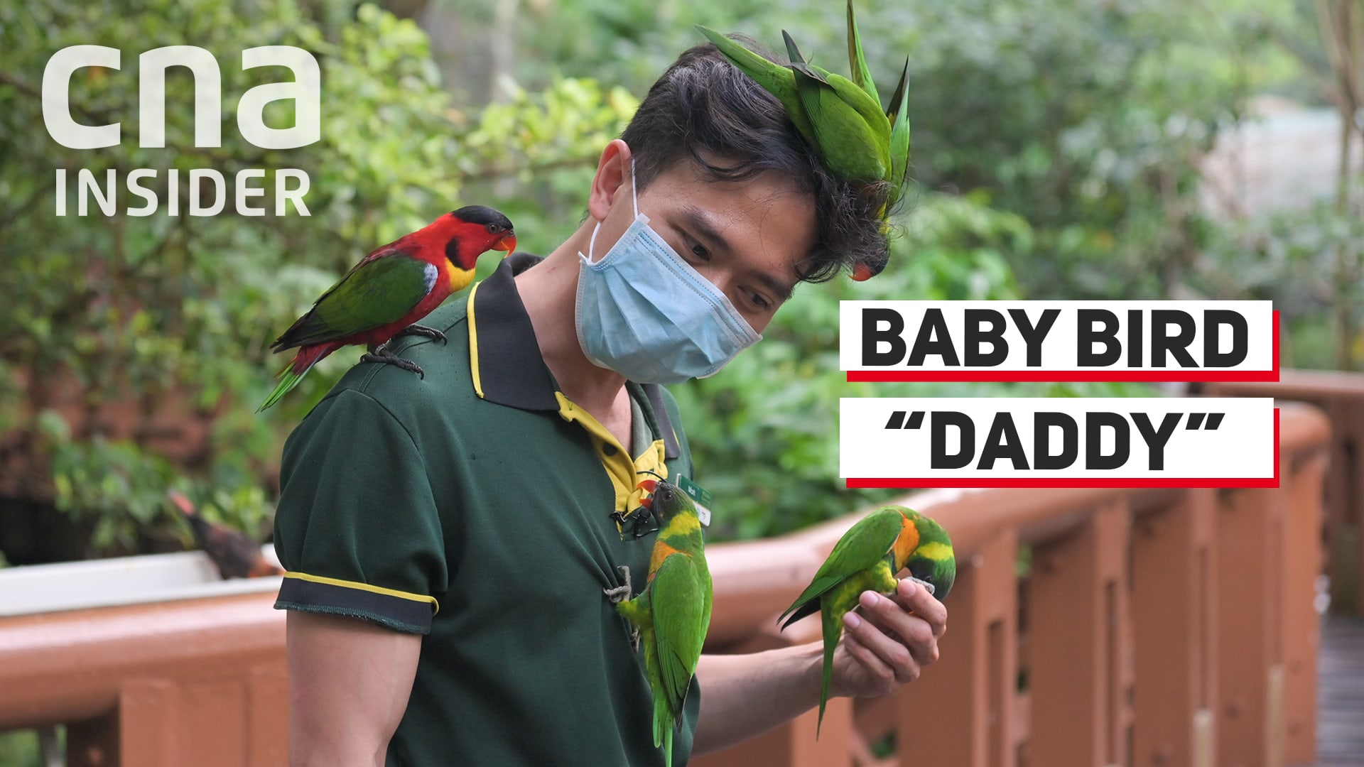 Bird Park's 'Foster Daddy' To Baby Endangered Birds
