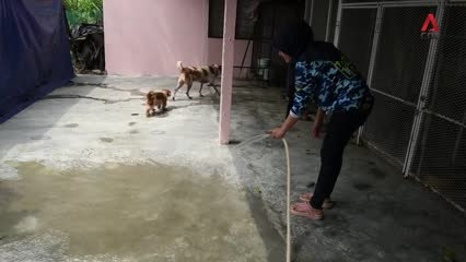 Meet the Malaysian couple fighting social stigma against dogs by rescuing injured animals | Video