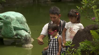 Singapore's only turtle and tortoise museum to relocate to Yishun in 2019 | Video