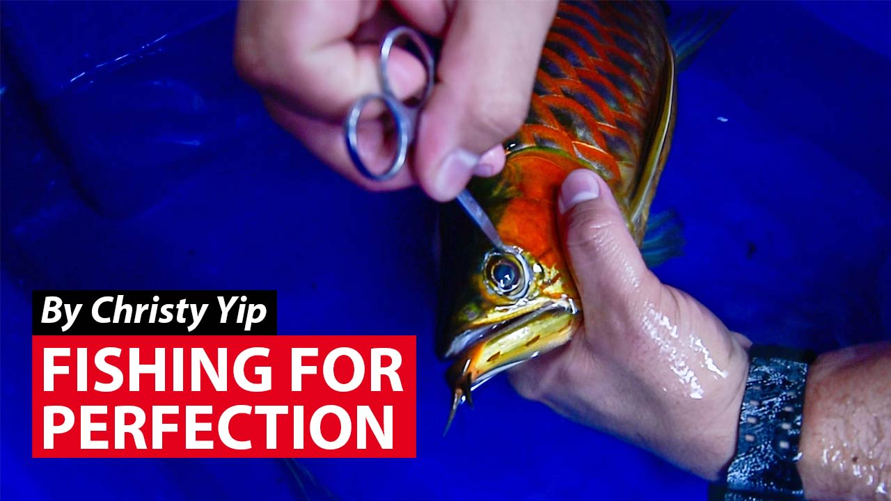 Fishing For Perfection | Video