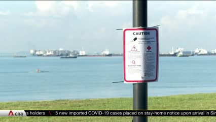 NParks puts up advisories on box jellyfish after sightings | Video