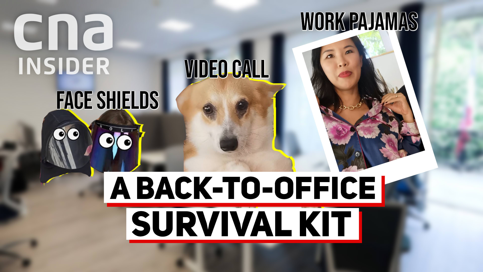 How to survive returning to the office - pet separation anxiety, taking naps, and more