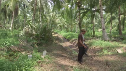 Indonesian firm offers alternative livelihoods for illegal loggers   Video