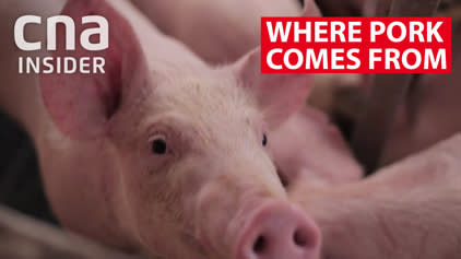 Where pork comes from: Malaysia pig farm to Singapore