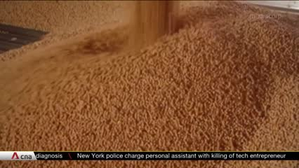 Brazil soy exports benefit from China-US trade tensions | Video