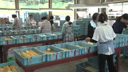 Agricultural impact of historic rains in Japan | Video