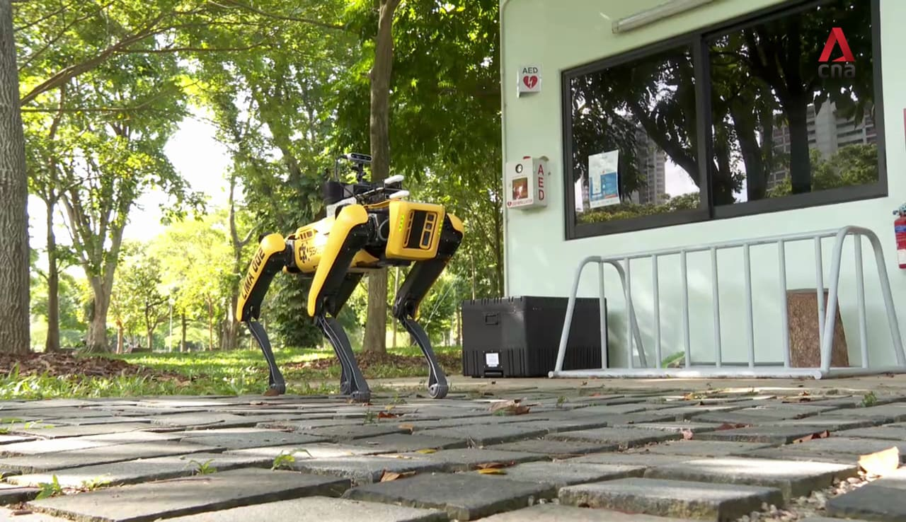 Meet the robot dog promoting safe distancing in Singapore's parks | Video