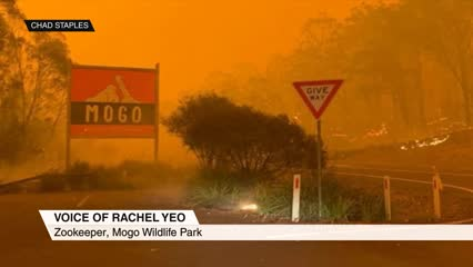 Singaporean zookeeper rescues wildlife from Australia fires | Video