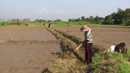 Asia expected to spend more than US$8 trillion on food by 2030   Video