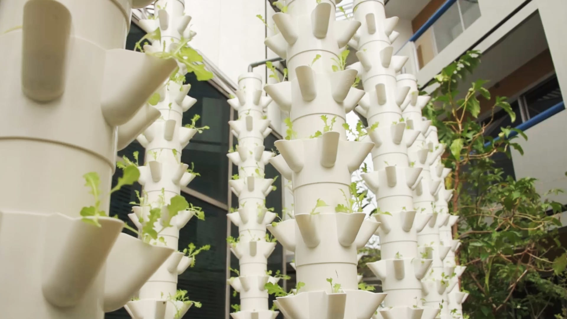 A fish and vegetable farm on a hotel rooftop in the heart of Singapore?