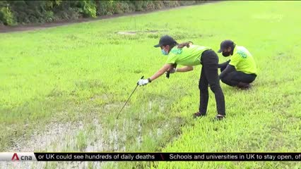 NEA not letting up on checks for mosquito breeding sites despite fall in dengue cases | Video