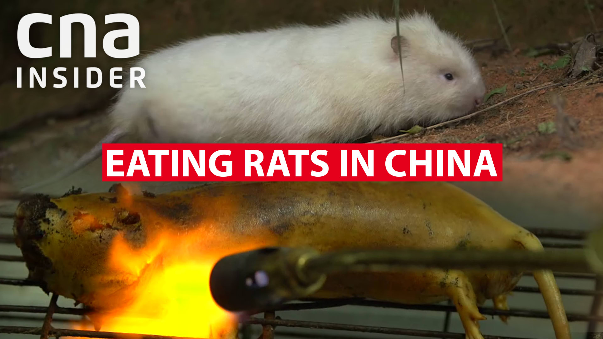 Eating bamboo rats in China