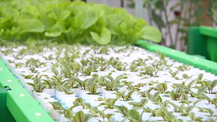Two hotels to produce own food with aquaponics | Video