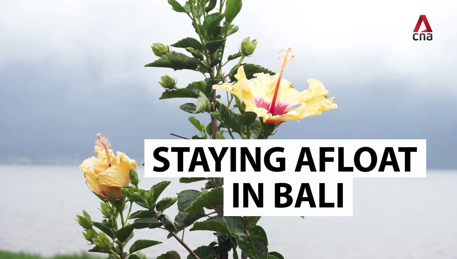 Many turn to odd jobs as COVID-19 hits Bali's tourism industry hard | Video