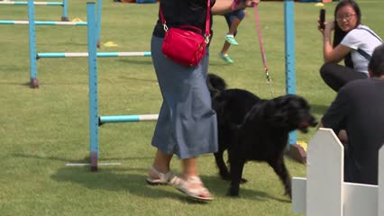 NParks to work with pet industry to raise standards, enhance traceability | Video