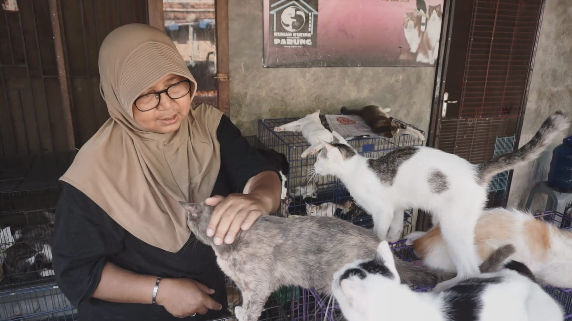 A home for 300 stray and abandoned cats in West Java, Indonesia | Video