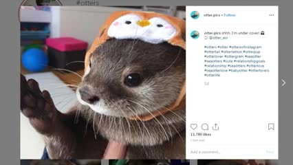 More protection for otters | Video