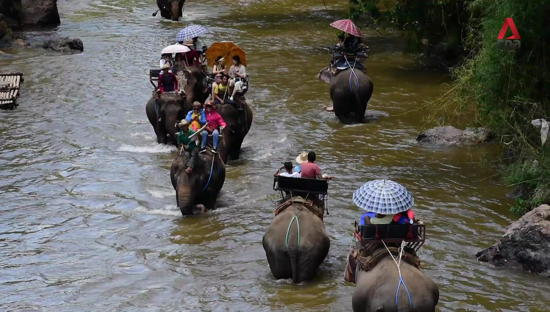 Behind the show: The making and breaking of Thailand's elephants | Video