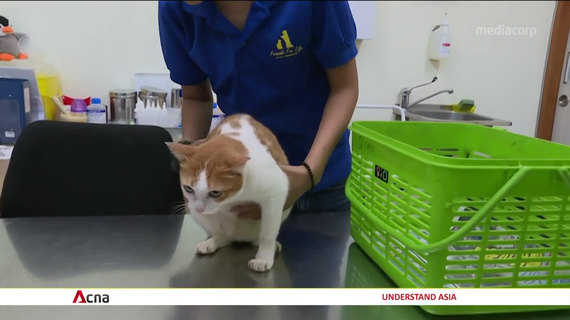 No evidence so far that animals can spread coronavirus: NParks | Video