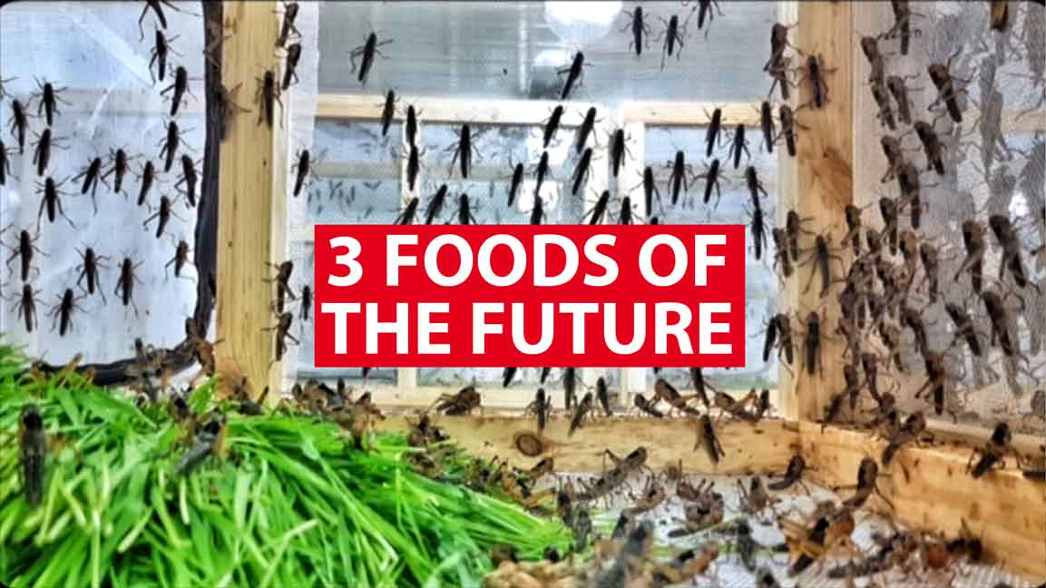3 foods of the future