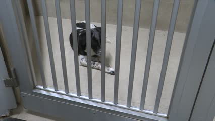 New SPCA upgraded clinic officially opens | Video