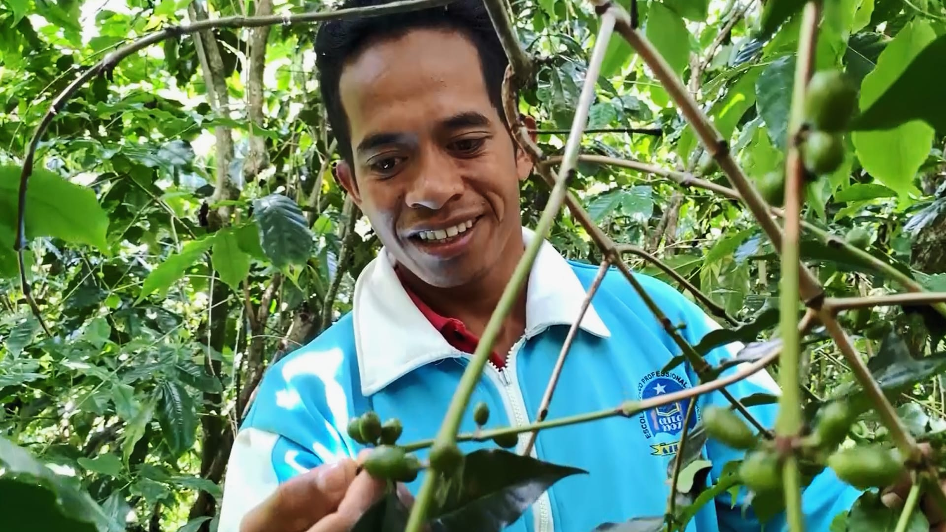 How Timor-Leste's coffee-growers are being threatened by climate change