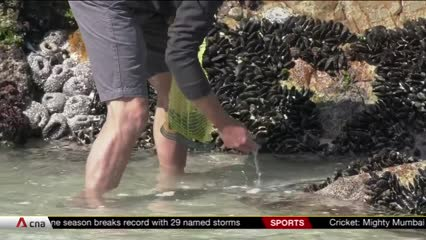 Foraging South Africa's coastline for seafood | Video