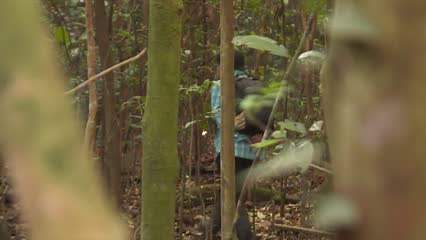 Mandai makeover: Wildlife surveys monitor biodiversity and forest health | Video