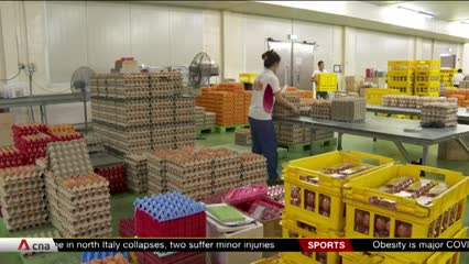 New S$30 million grant to help Singapore farms speed up production of eggs, vegetables and fish | Video